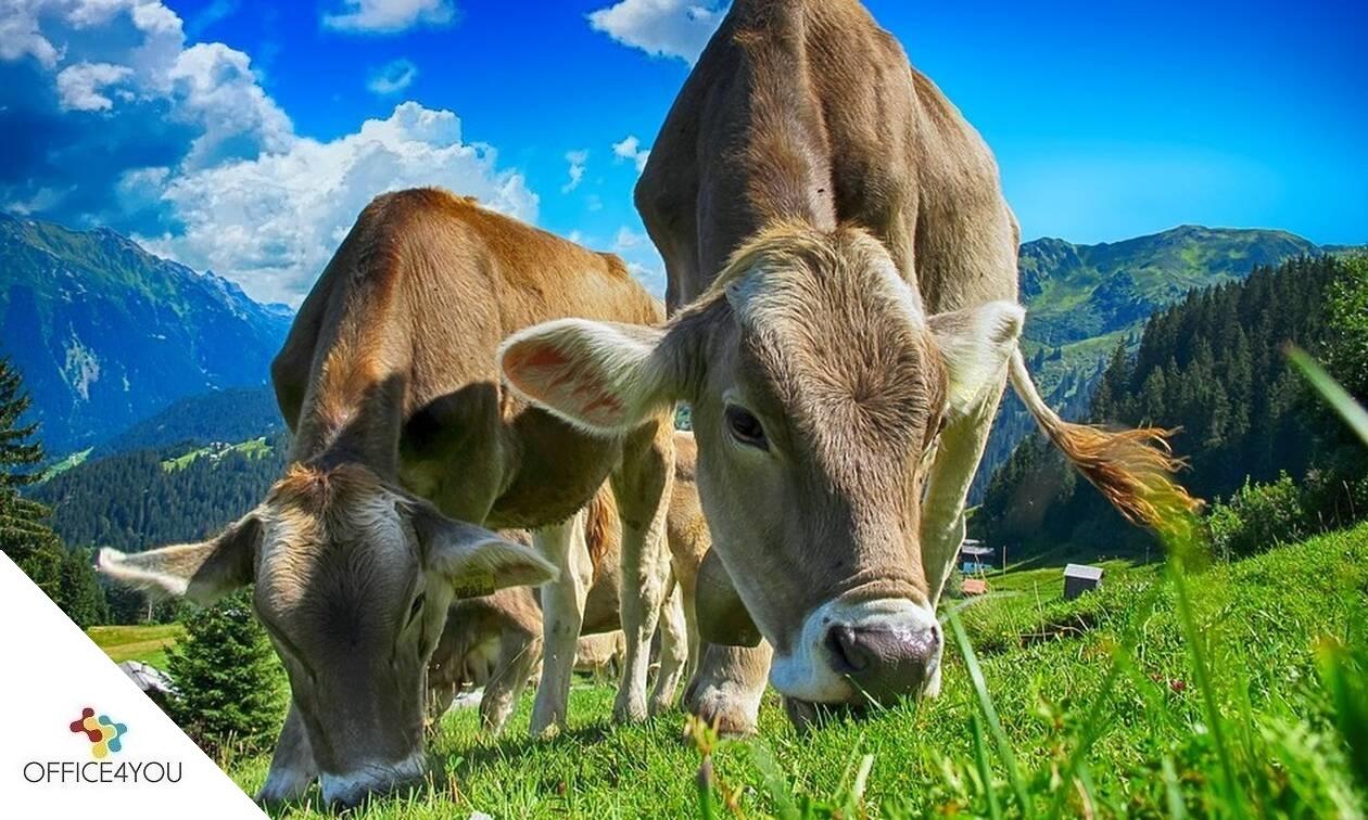 Παράταση για τις αιτήσεις στήριξης Βιολογικής Κτηνοτροφίας